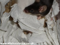 All About Mice Litter Bedding